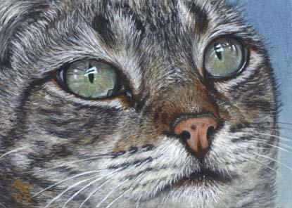 Grey Tabby Cat Paintings