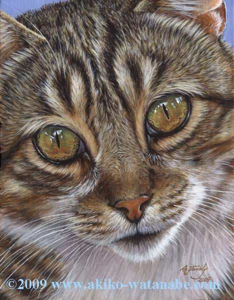 Eyes of Billy (Gray Tabby Cat Print) - Click Image to Close
