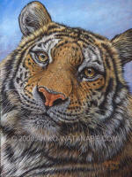 Portrait_of_a_Tiger_Cr