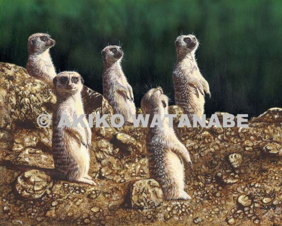 Watchful Eyes (Meerkat Meerkats)