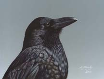 Study_of_a_Raven_small