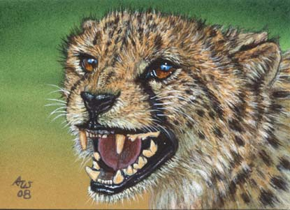 ACEO Cheetah #10
