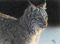 ACEO_Lynx_2_small