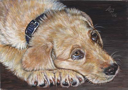 ACEO Retriever #2