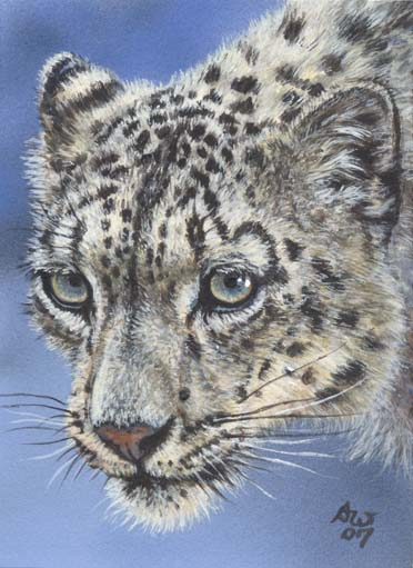 ACEO Snow leopard 08